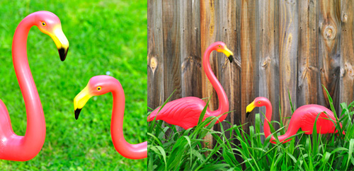 Pink lawn flamingos